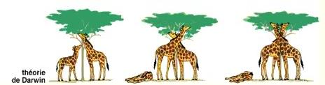 Quan điểm của Đacuyn về sự hình thành loài hươu cao cổ