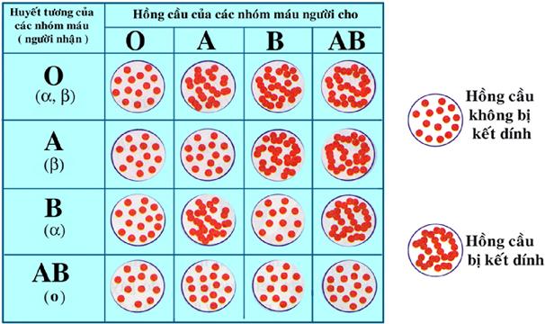 Kết quả phản ứng giữa các nhóm máu
