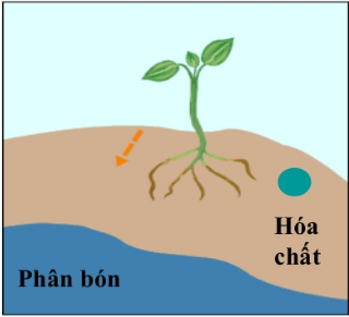 Hướng hóa của rễ