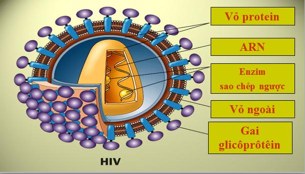 Cấu tạo của virut HIV