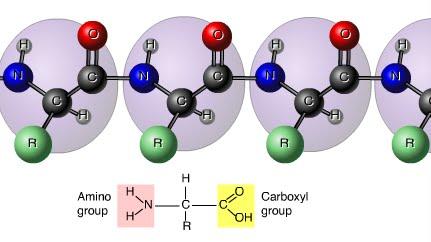cấu trúc phân tử của axit amin