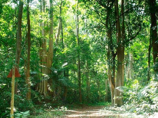 Các cây trong rừng mọc gần nhau