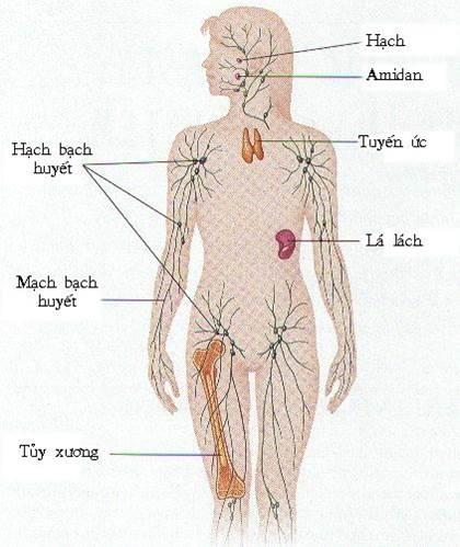 hệ miễn dịch ở người