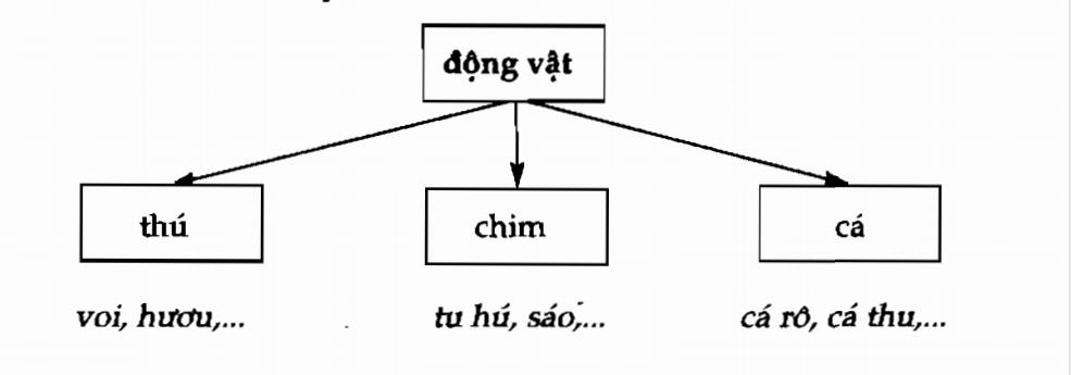 Từ ngữ nghĩa rộng - từ ngữ nghĩa hẹp