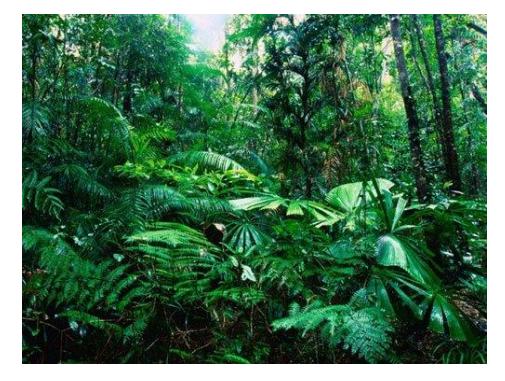 khu rừng mưa nhiệt đới