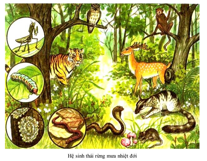 Hệ sinh thái rừng mưa nhiệt đới