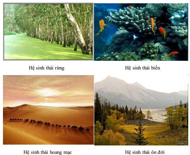 Ví dụ hệ sinh thái