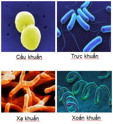 Các loại vi sinh vật nhân sơ