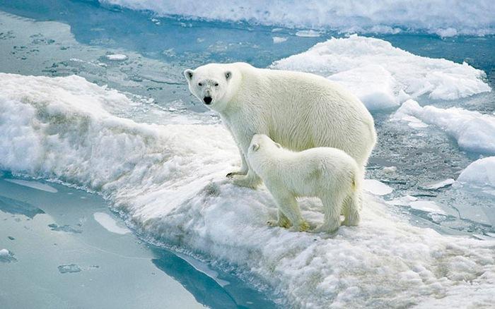 môi trường bắc cực
