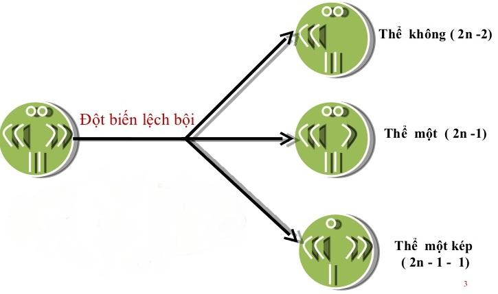 Cơ chế hình thành các dạng đột biến lệch bội