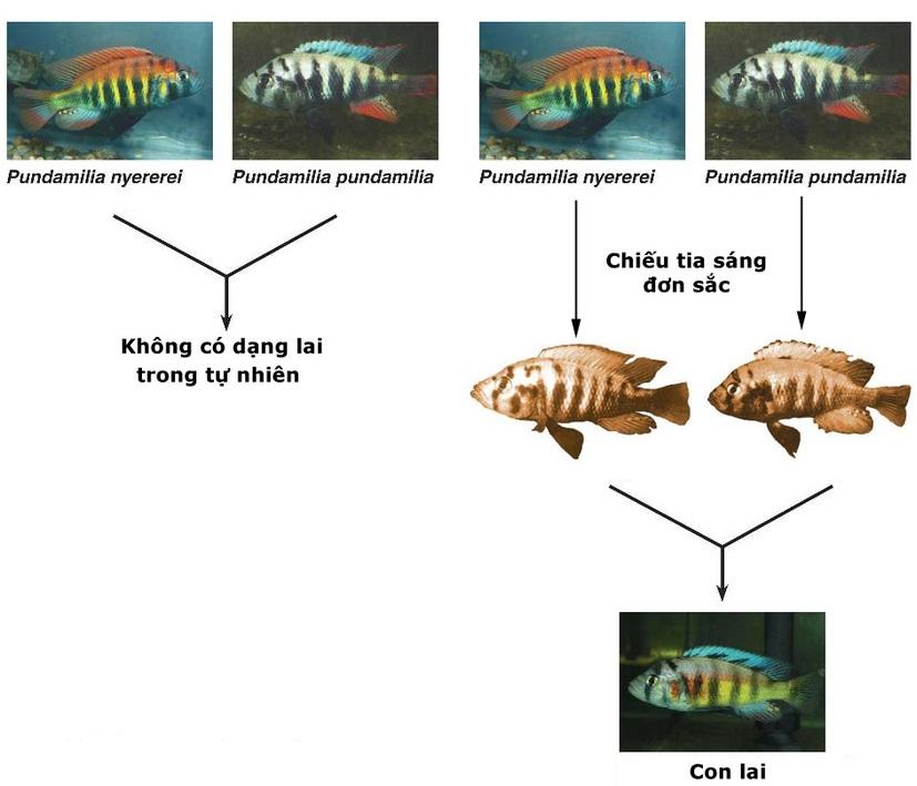 Hình thành loài bằng cách li tập tính