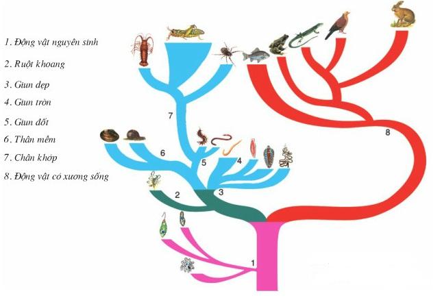 cây phát sinh giới động vật