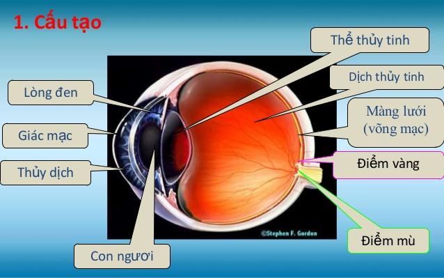 Cấu tạo quang học cảu mắt