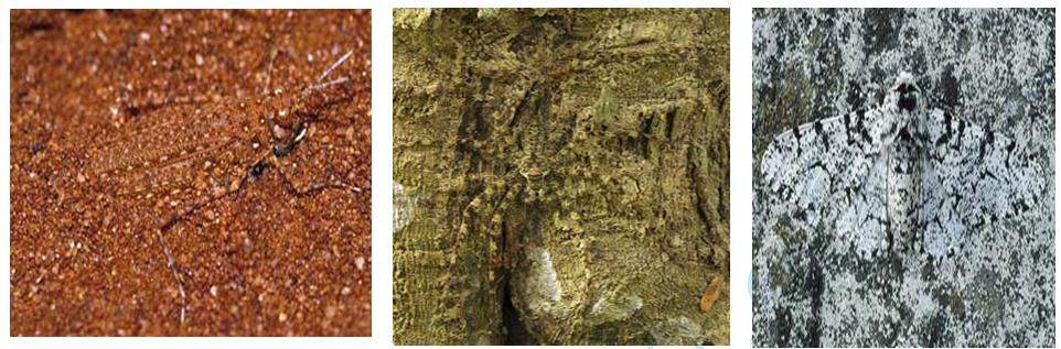 bọ, nhện và bướm biến đổi hình thái cơ thể theo môi trường sống