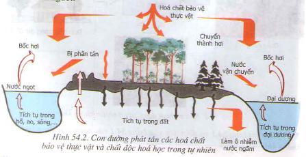 Con đường phát tán các hóa chất bảo vệ thực vật