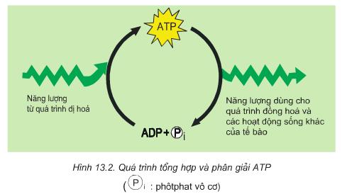Chuyển hoá ATP