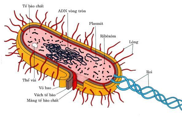 cấu tạo chung của vi khuẩn