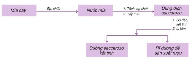 Quy trình sản xuất Saccarozơ từ mía