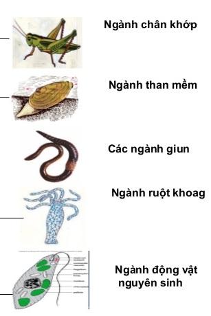 các ngành động vật không xương sống