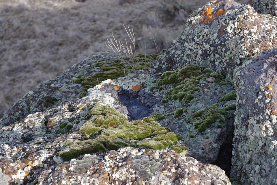 địa y trên vách đá
