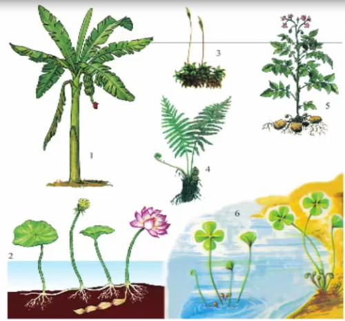 Thực vật có hoa và không có hoa