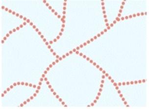 Cấu trúc phân tử tinh bột