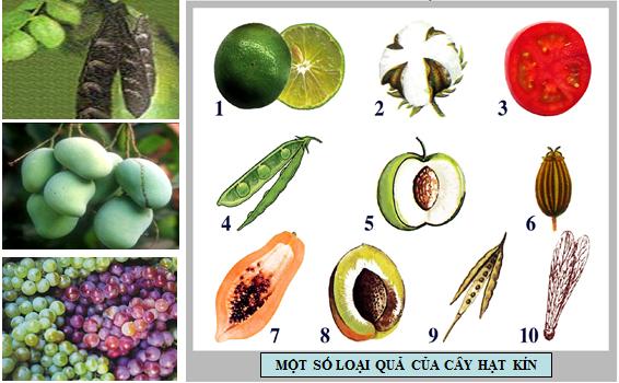 Một số loại quả của cây hạt kín