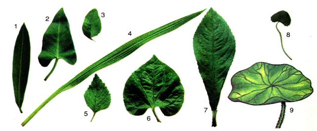 Lá của một số loại cây