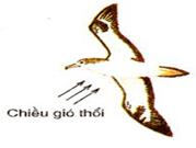 Kiểu bay lượn của bồ câu
