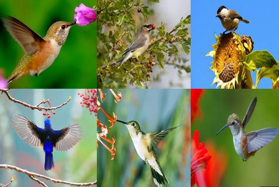 Chim thụ phấn cây trồng , phát tán quả, hạt