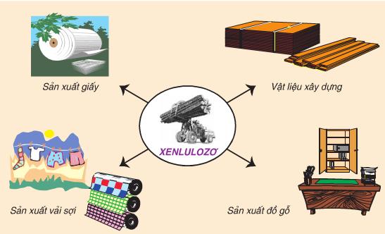 ứng dụng của tinh bột và Xenlulozơ