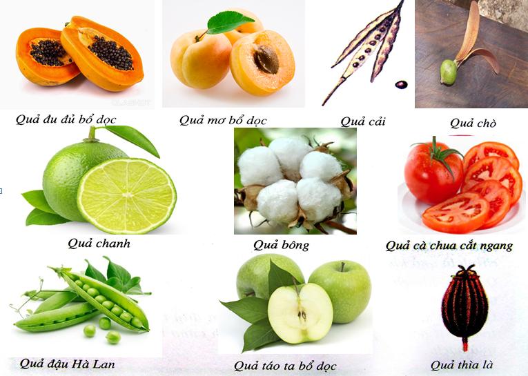 Phân biệt các loại quả