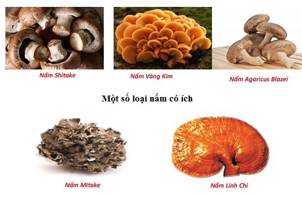 một số loại nấm có ích