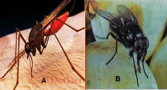 Muỗi và ruồi