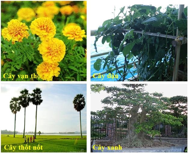 Một số loại thân cây