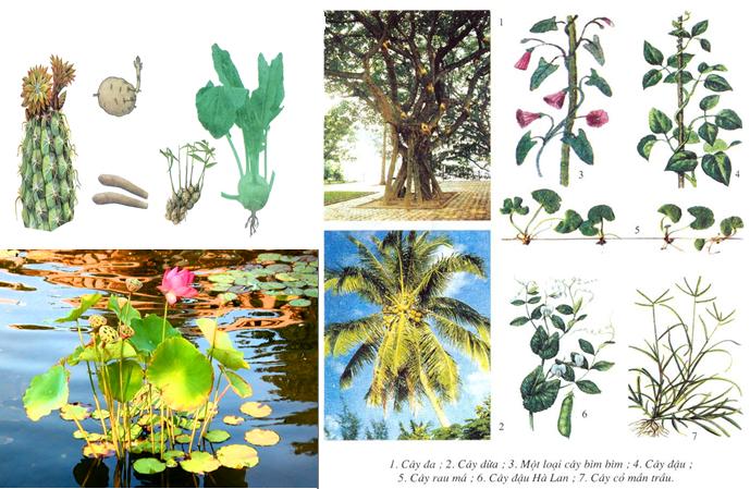 Các dạng thân của thực vật