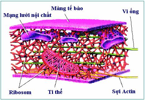 Khung xương tế bào