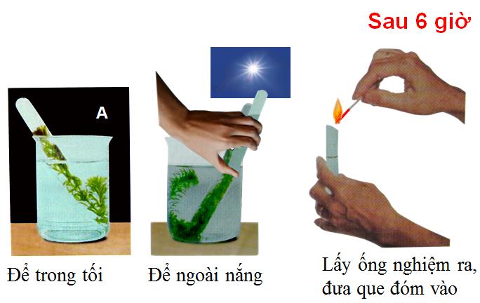 Thí nghiệm xác định chất khí thải ra trong quá trình lá chế biến tinh bột