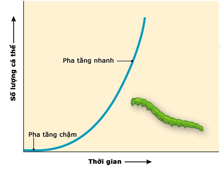 Tăng trưởng kích thước của quần thể sâu trong môi trường lí tưởng