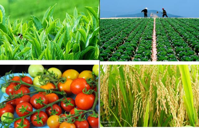 Năng suất cây trồng