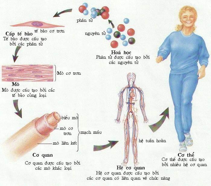 Tổng quan các bộ phận cấu tạo cơ thể người