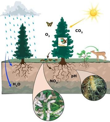 Các nhân tố sinh thái