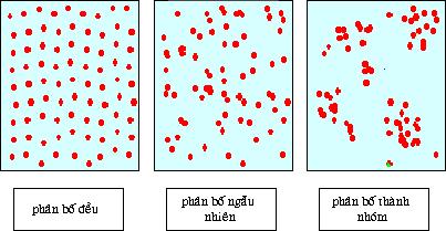 Các kiểu phân bố cá thể trong quần thể