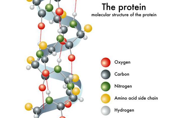 Cấu trúc phân tử Protein