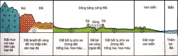 Hình 36.1. Lát cát địa hình – thổ nhưỡng theo vĩ tuyến 20oB