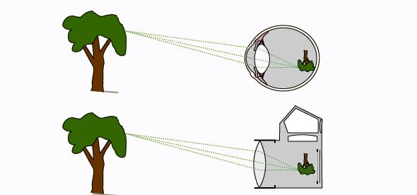Mắt hoạt động như một máy chụp ảnh phim