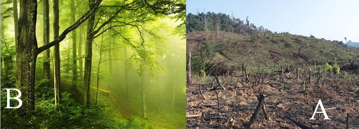 Khí hậu ở trong rừng và ngoài chỗ trống