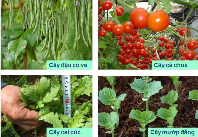 Một số cây thu quả, hạt, thân, lá