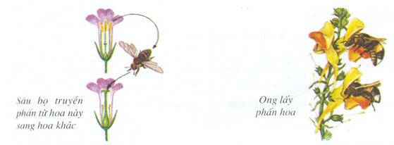 Hoa thụ phấn nhờ sâu bọ