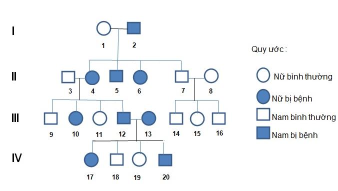 Sơ đồ phả hệ mô tả sự di truyền